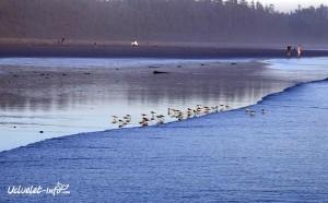 Birds-LongBeachUI